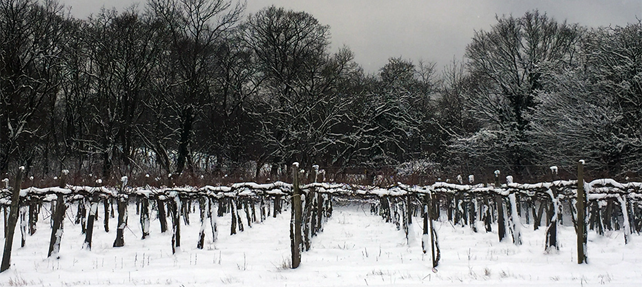 Wintry wine landscape